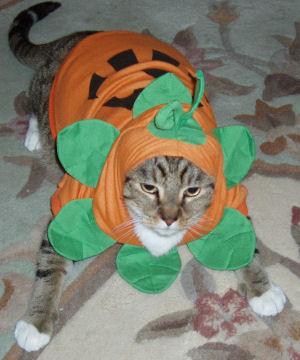 pumpkinchains.jpg