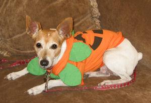 pumpkinmin.jpg