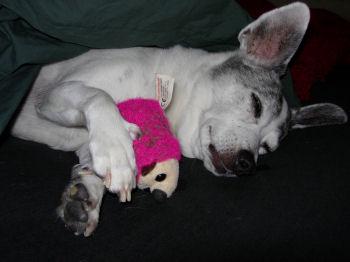 sleepingpinky1.jpg