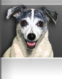 Kyliedog.com